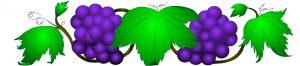 grapes-vine-clipart-4niBbgMcA